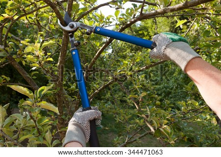 Farmer pruning an apple tree with pruning shears - stock photo