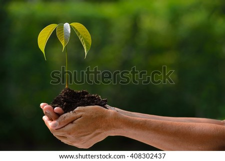 Farmer's hands holding a green young plant - stock photo