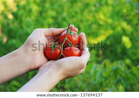 Farmer showing organic tomatoes. Healthy food concept - stock photo
