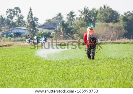 farmer spraying pesticide in the rice field - stock photo