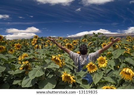 farmer standing in a sunflower field with his arms spread out - stock photo