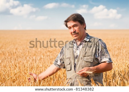 farmer standing in a wheat field, looking at the crop - stock photo