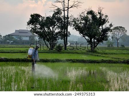 farmer thai - stock photo