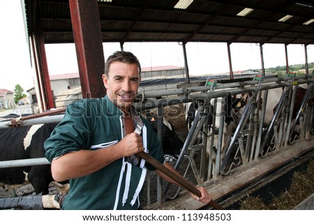 Farmer using fork in barn to feed cows - stock photo