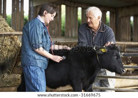 Farmer With Vet Examining Calf - stock photo