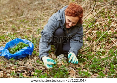 Farmer woman picking fresh nettle leaves with protection gloves - stock photo