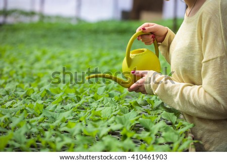 Farmer woman waters rows of green plant seedlings in greenhouse with a watering can. Cultivated sprouts in rich soil were grown under the sun in glasshouse. - stock photo