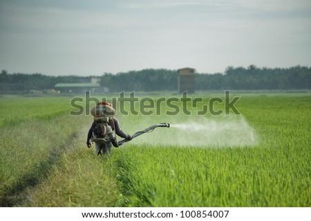 Farmer working in paddy field - stock photo
