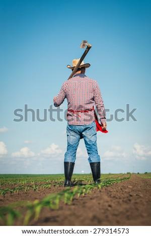 Farmer working in the corn field - stock photo