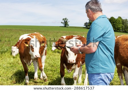 Farmers are using tablet computer at his cows - stock photo