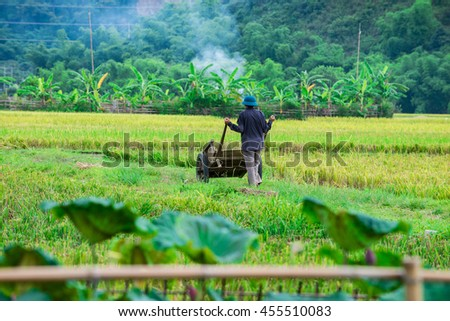 Farmers harvest rice in the summer harvest season at Mai Chau valley, Hoa Binh province, Vietnam June 18, 2016. This is one of the important season paddy rice of the year. - stock photo