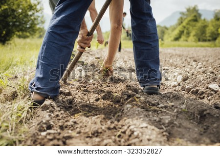 Farmers working in the fields hoeing and tilling the fertile soil during a summer sunny day - stock photo