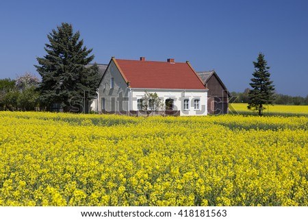 farmhouse in the rapeseed field in germany near mecklenburg coast - stock photo
