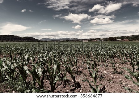 Farmhouses Surrounded by Fields of Young Corn, Retro Image Filtered Style  - stock photo