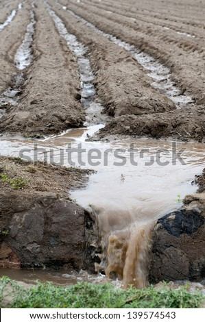 Farming irrigation canals/Surcos  - stock photo