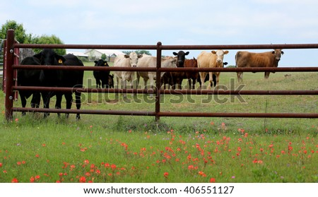 Farming: metal fence for livestock on spring flowered field. - stock photo