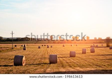 Farmland - stock photo