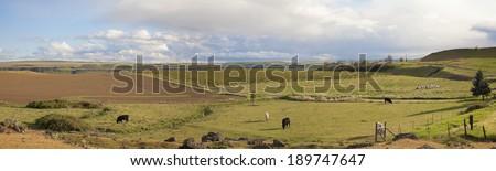 Farmland at Maryhill Washington State with Cows Grazing on Green Pasture and Stonehenge at Maryhill State Park Panorama - stock photo