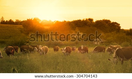 Farmland summer scene in sunset - stock photo