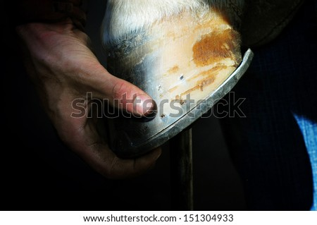 farrier holds a hoof of horse leg - stock photo