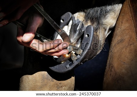 farrier taking off the nail from horseshoe on a hoof - stock photo