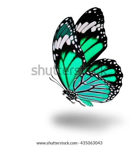 Fascinated flying light green butterfly with wings sweeping and soft shadow beneath on white background - stock photo