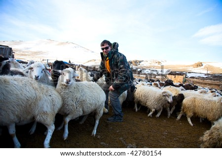Fashion shepherd in the flock for the work - stock photo