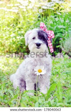 fashionable dog with red ribbon sitting in the garden - stock photo