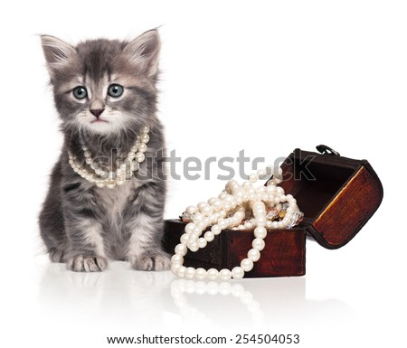 Fashionable kitten with a wooden chest with pearls isolated on white background - stock photo