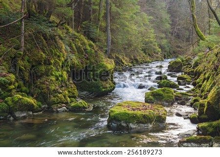 fast mountain river flowing among mossy stones - stock photo