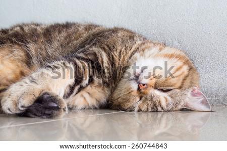 Fat cat sleeping on the floor - stock photo
