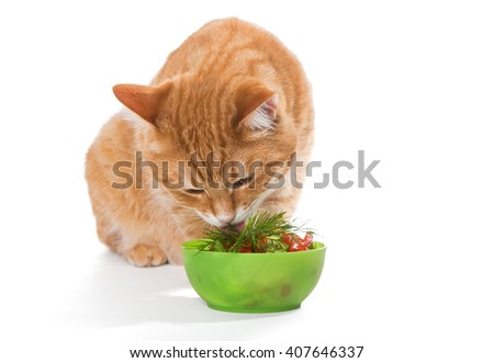 Fat ginger cat eating a salad, isolated on white - stock photo