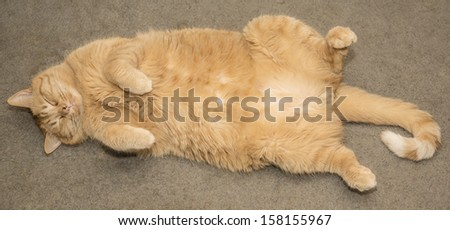 Fat orange cat sleeping - stock photo