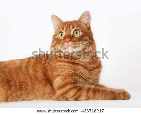 Fat red cat with green eyes - stock photo