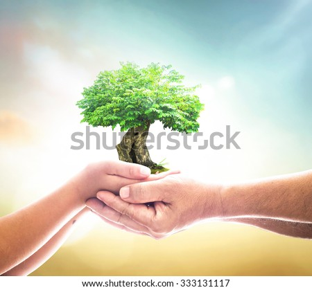 Father and son hands holding big green plant on blur sunset background. Human Rights Day, Ecology, Environment, CSR, Insurance Agent, Trust, Investment, ROI concept. - stock photo