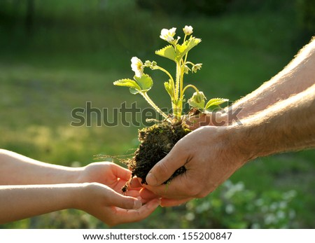 Father giving his daughter a plant - stock photo
