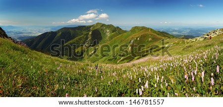 Fatra mountain panorama with flower - Slovakia - stock photo