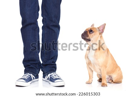 fawn bulldog dog and owner ready to go for a walk, or dog being punished  for a bad behavior, isolated  on white background - stock photo