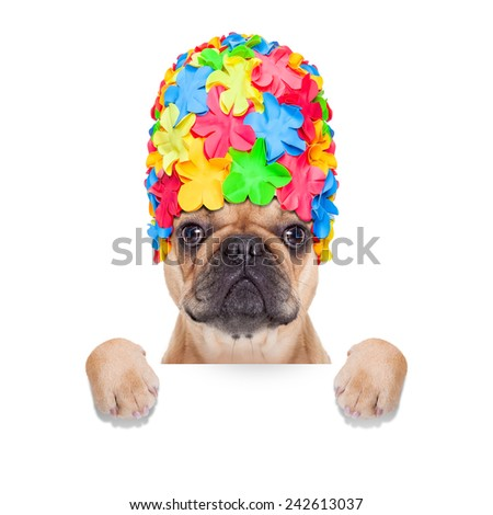 fawn french bulldog dog ready for summer vacation or holidays, behind  blank banner or placard, isolated on white background - stock photo