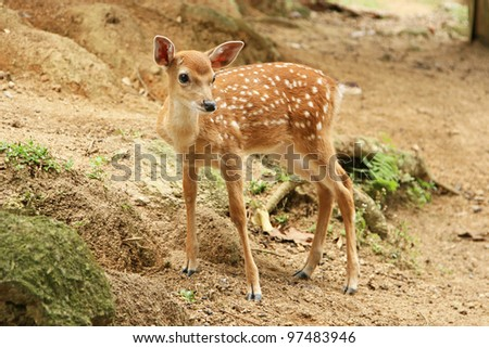 fawn in a forest - stock photo