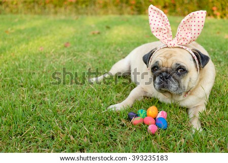 Fawn pug dog wearing rabbit headband with colorful easter eggs on grass. - stock photo