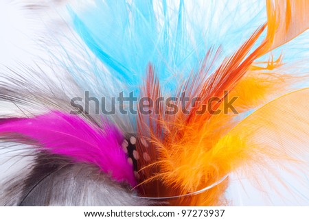 Feather - stock photo