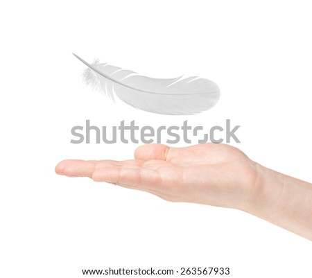 feather and hand on white background - stock photo
