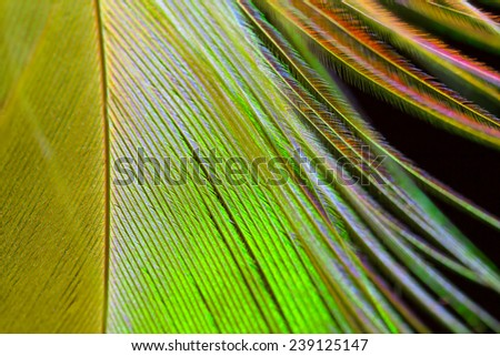 Feather macro close up - stock photo
