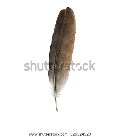Feather pen isolated on a white background - stock photo