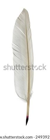 Feather pen isolated on white background - stock photo