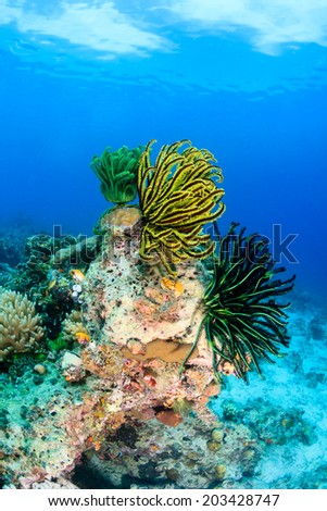 Feather stars growing on a coral pinnacle - stock photo