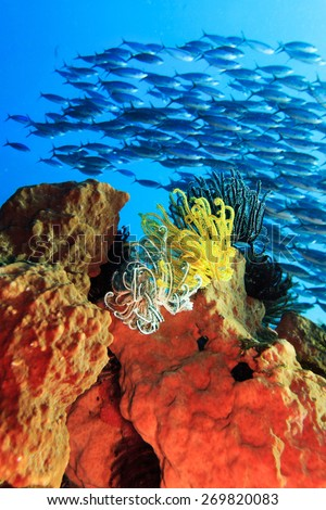 Feather stars on the coral. Fishes on the background - stock photo
