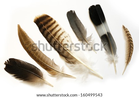 Feathers - stock photo