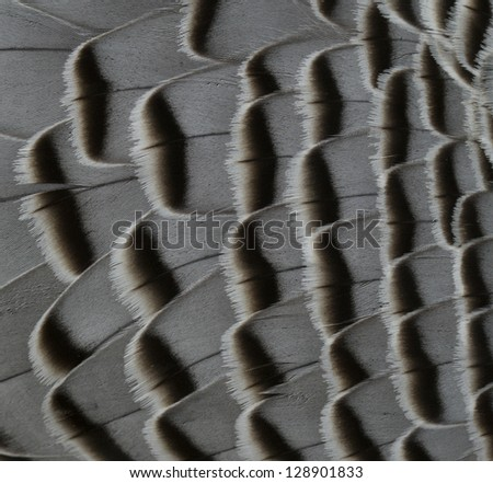 feathers - abstract background - stock photo